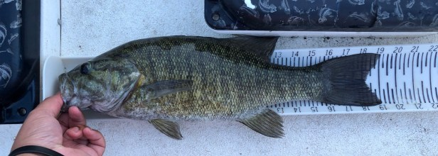 smallmouth_measure-board_rotated.jpg