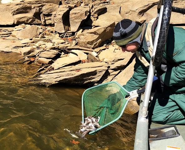 Stocking Smallmouth Bass on Blue Ridge Lake