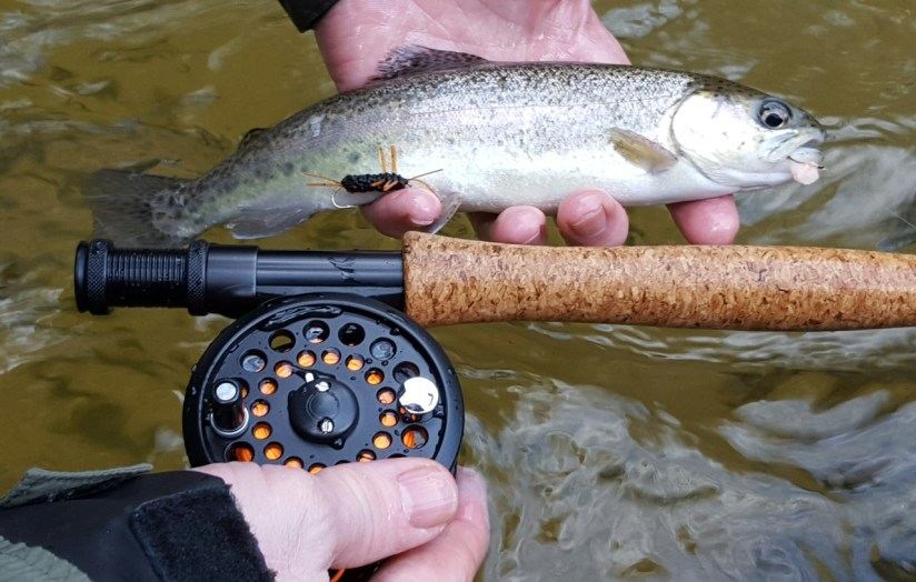 "Rainbow Trout, Chattooga DH ""legs and eggs"""