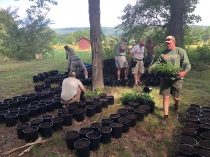 Aq Plants Arrowhead for Toona pic1 June 2019