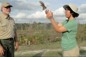 Volunteer helps release bird during breeding bird survey.