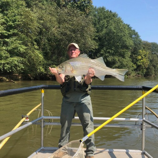 Check out this nice Striped Bass sampled in the Chattahoochee River below Morgan Falls Dam. Try fishing the first bend downriver on the west bank in deep holes with woody structure, maybe casting a large swim bait like a Bull Shad. Good luck!