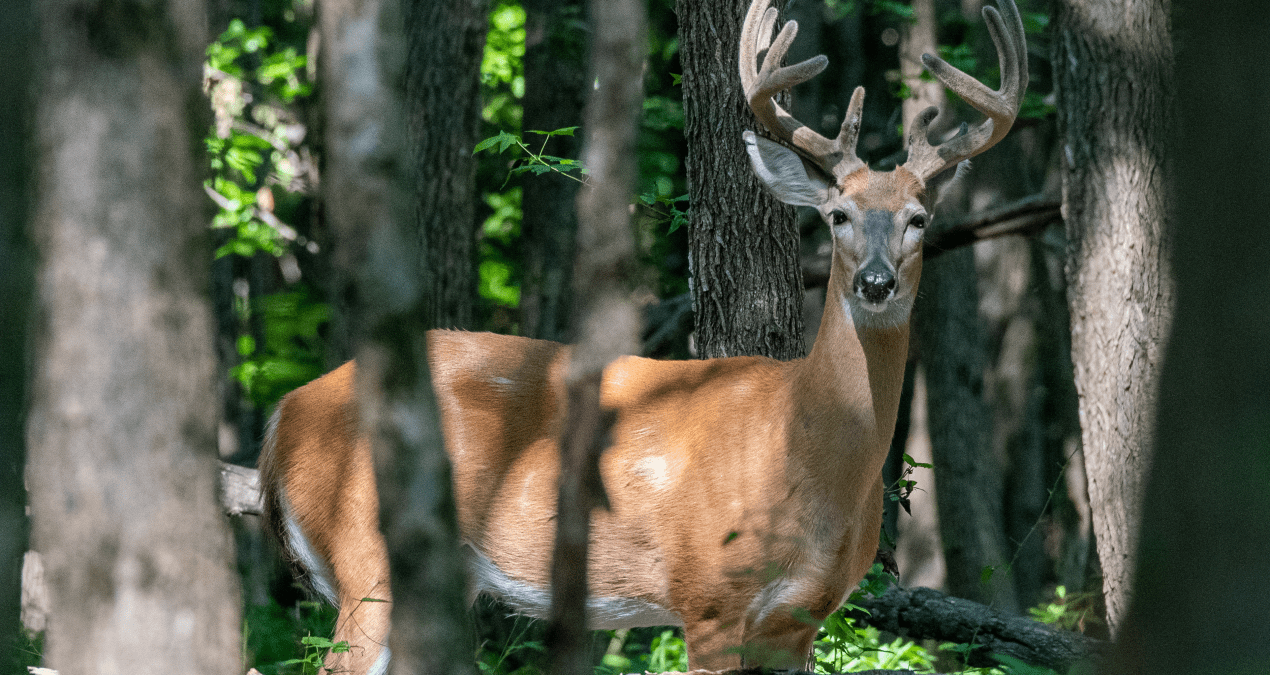 5 Times to be Worried About Sick-looking Deer