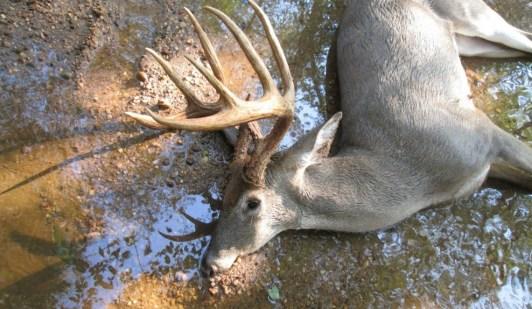 Buck found dead in water