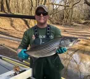 Upper Chattahoochee Striped Bass