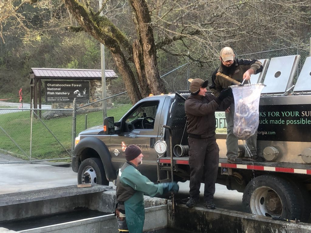 Trout Loading at CFNFH