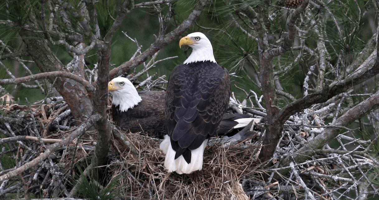 2020 Bald Eagle Surveys