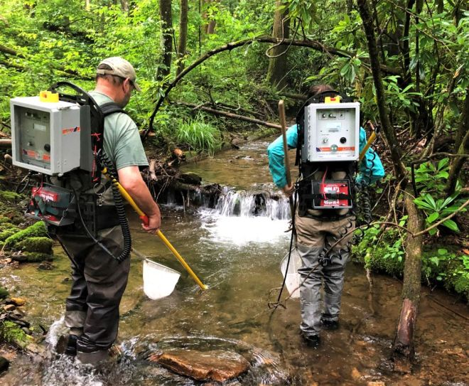 Backpack Electrofishing Sampling Work