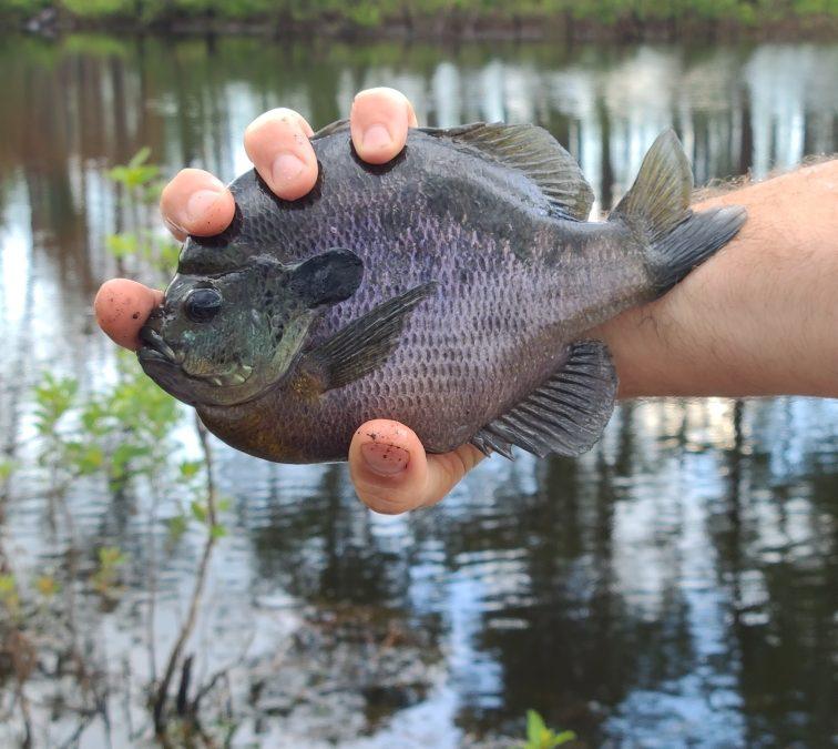 Georgia Fishing Report: June 11, 2021
