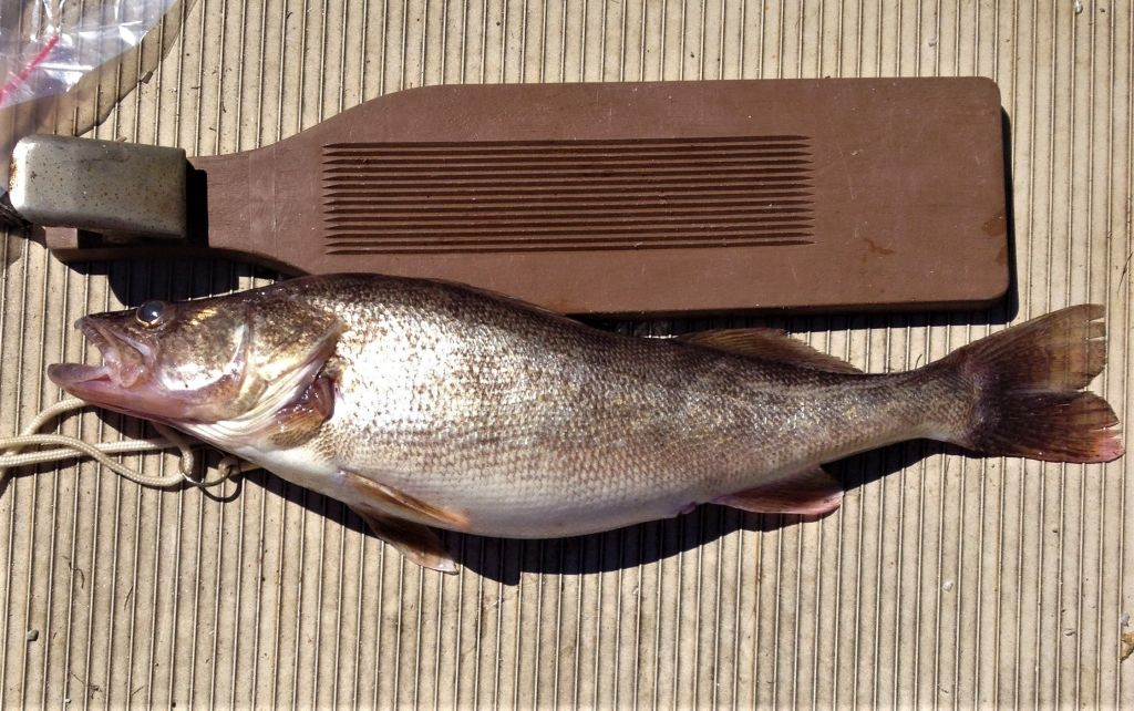 Georgia Fishing Report: October 1, 2021