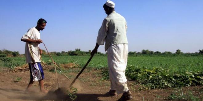 How Arabs can tackle food security