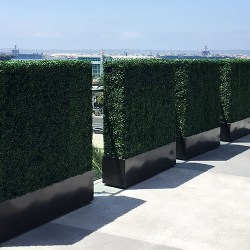 Commercial Hedges