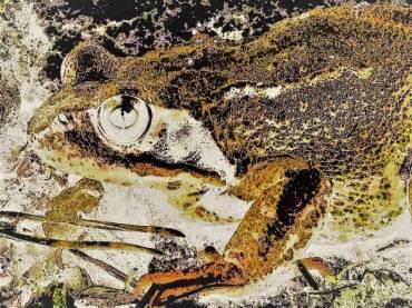 sauvons la grenouille rousse