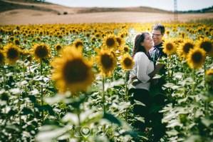 Fotos Boda Cuenca: Sesión de pre-boda con girasoles en Cuenca (42)