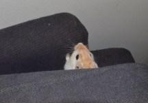 Timon&Pumbaa - 9