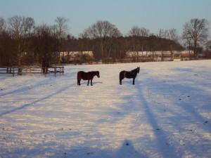 uckermark-pferde