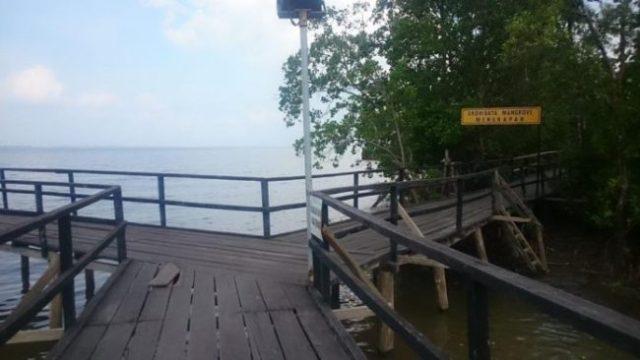 Taman Ekowisata Mangrove Mengkapan yang berada paling dekat dengan jalur cincin terlama GMC 2019. Kredit : Haluan Pos