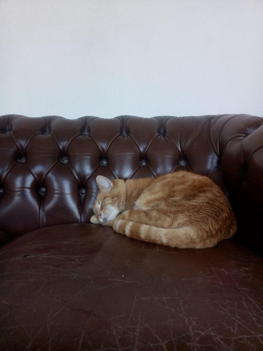 Hoe je kat een pilletje geven?