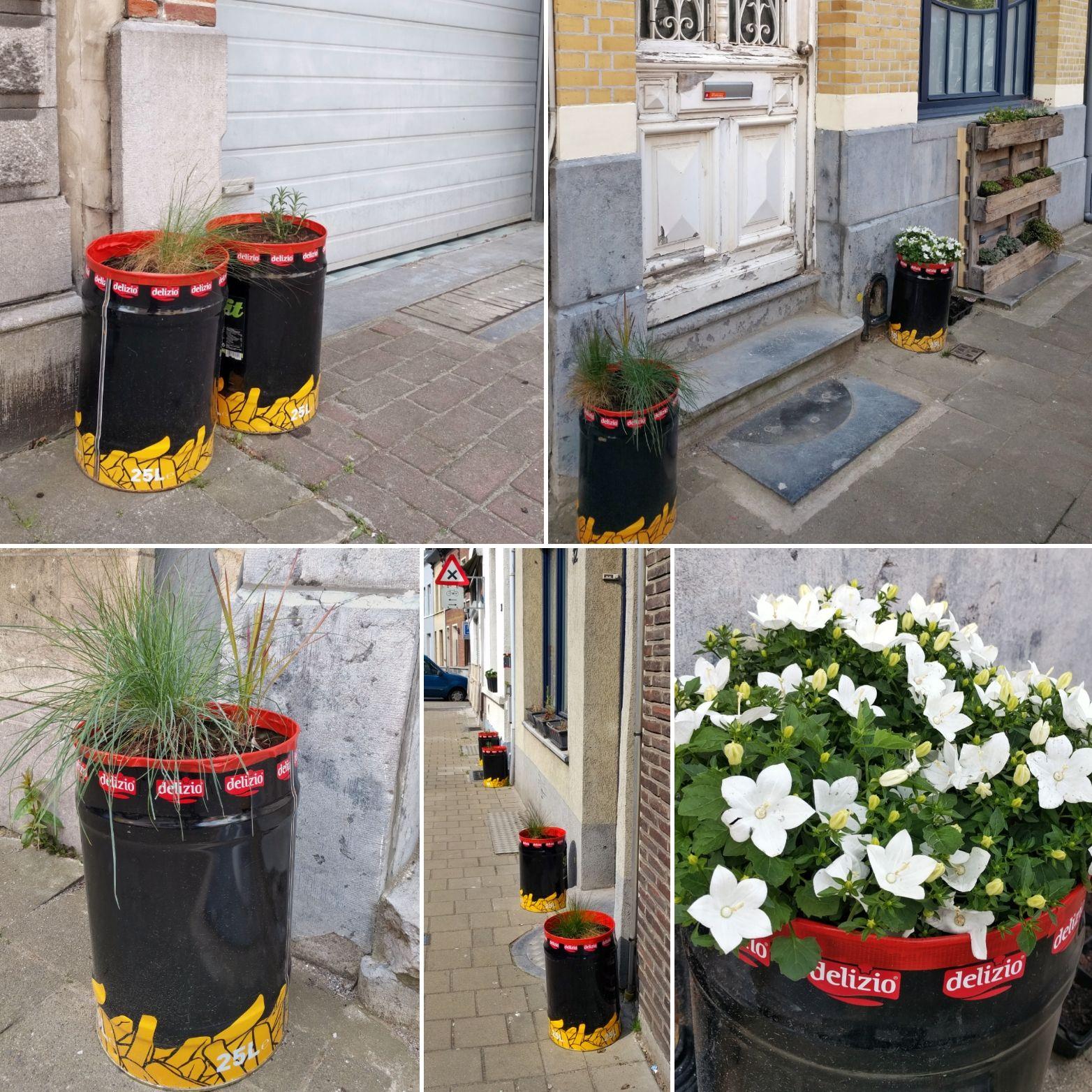 buurt opfleuren plantjes in groot blik