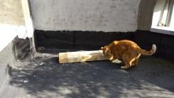 krabpaal met Hobbes