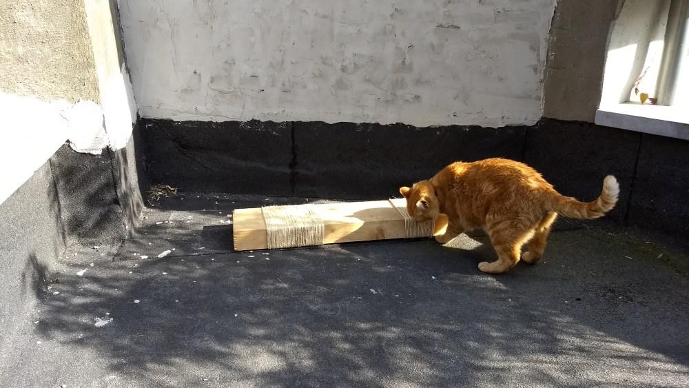 DIY: een krabpaal maken voor je kat
