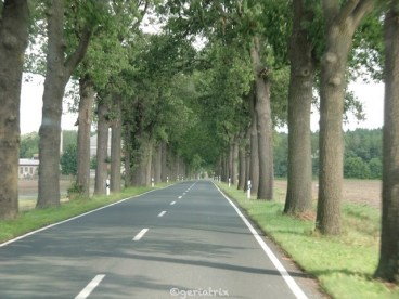072-allee_new