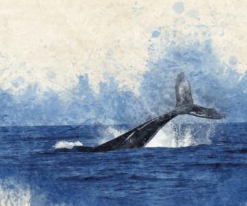 İklimi Korumak İçin Balinaları Koru