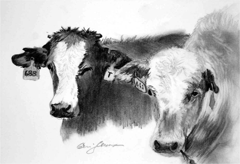 A Couple of Cattle... with Ear Tags (2/3)