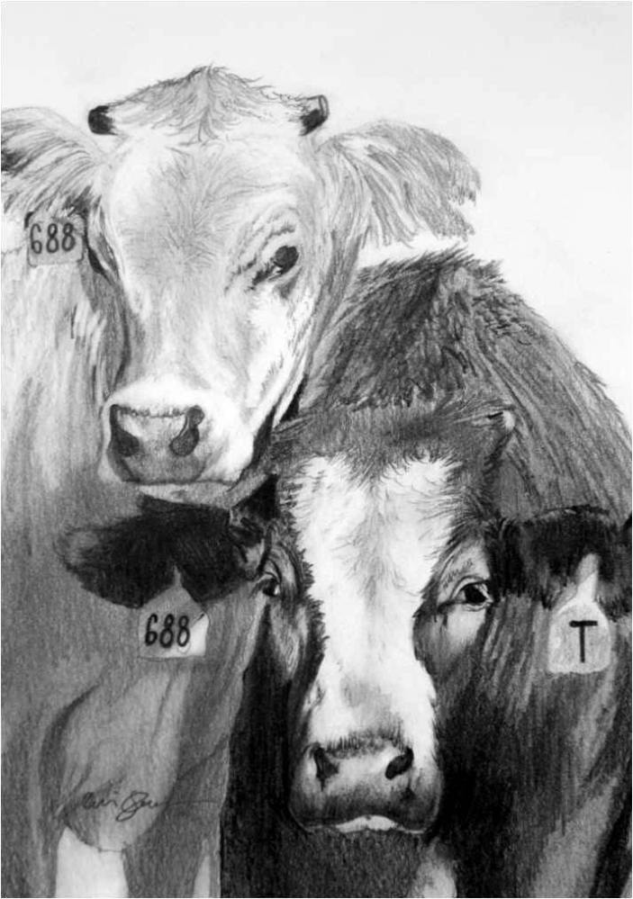 A Couple of Cattle... with Ear Tags (3/3)