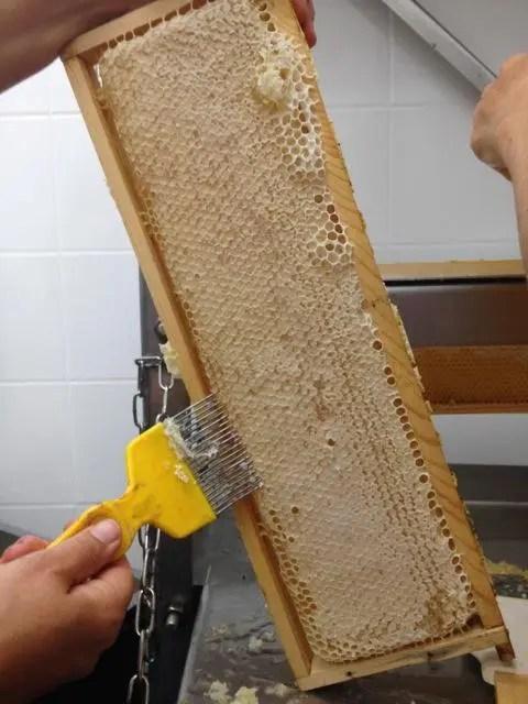 Honig Waben Bienen Honigschlecken Verkostung Imkern German Abendbrot