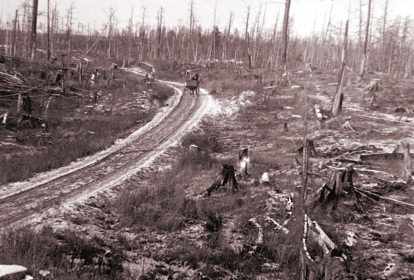 Road leading out of Hermansville, MI, 1899 - by Charlie Nieman. Brother John had a lumber camp and a company store in the area.