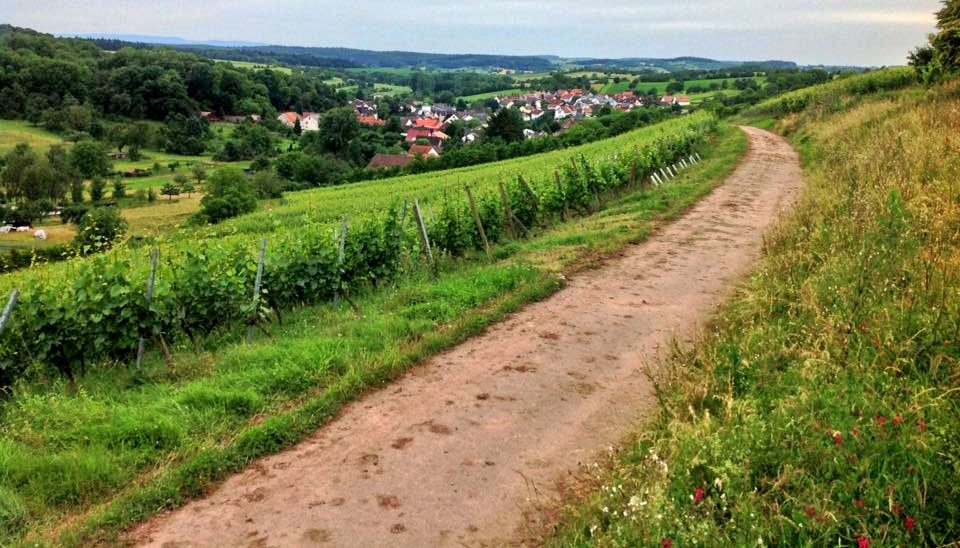 neuenberg-from-the-vineyards-2