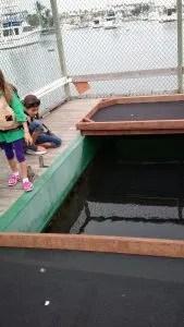 Breeding station for white Sea Bass