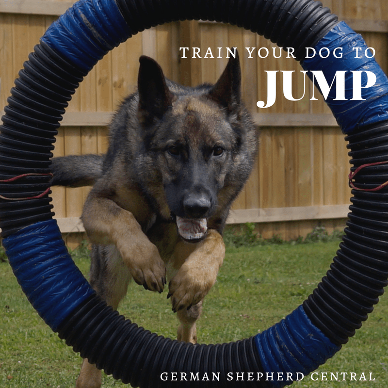 Teach your German Shepherd how to jump