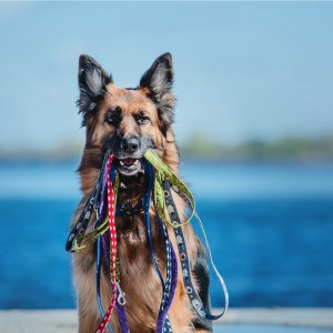 Best Dog Collars And Leashes For German Shepherds