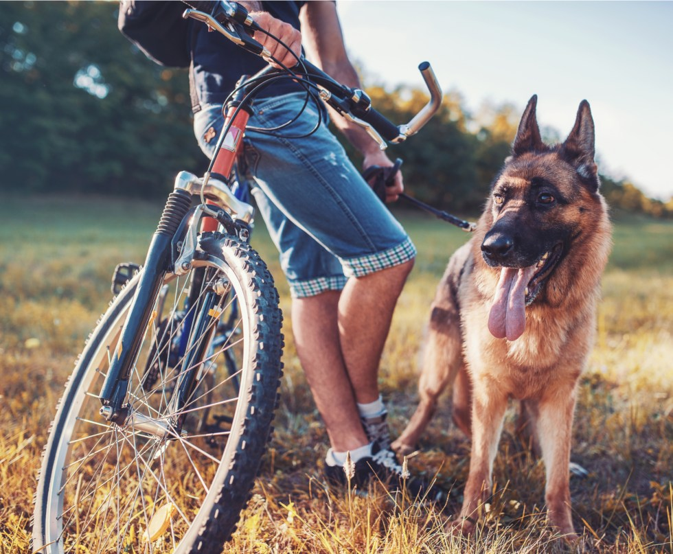 biking with your German Shepherd