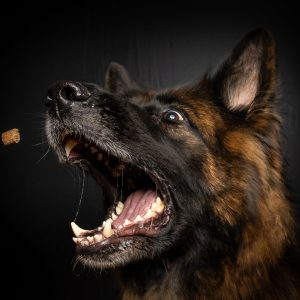 7 Best Treats For German Shepherds