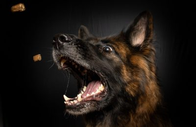 Best Treats For German Shepherd