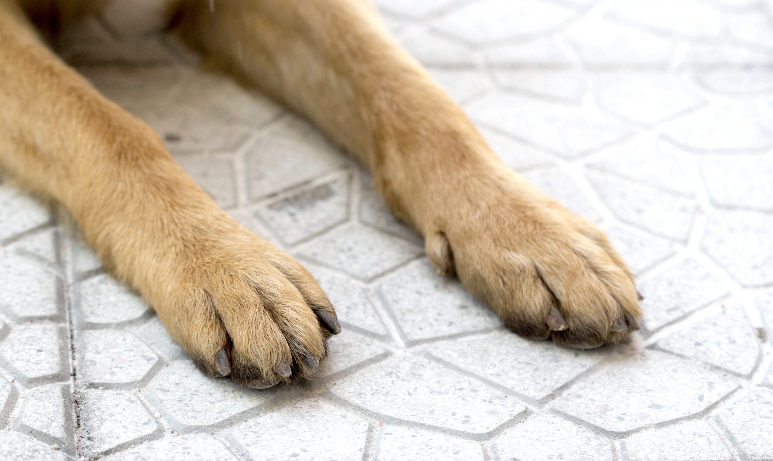 Best nail clippers for german shepherds