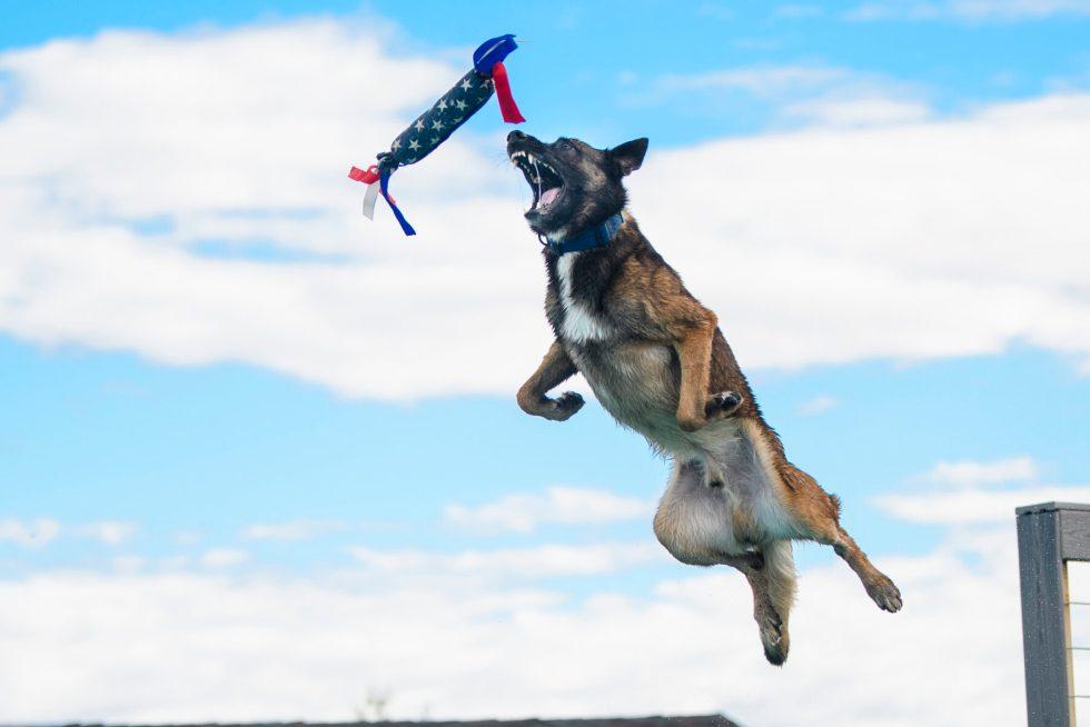 Dock diving dog