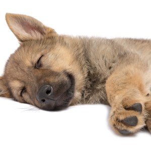 What To Put In A Puppy Crate At Night