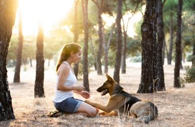 Are German Shepherds Easy To Train