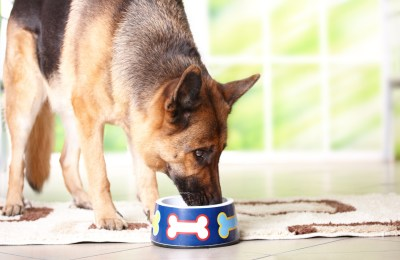 Dog Food Supplements For Weight Gain