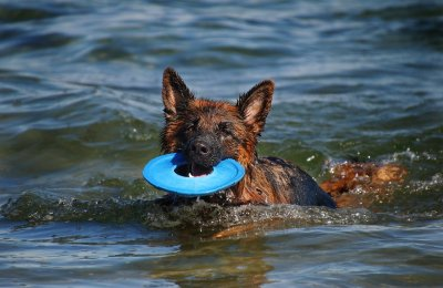 Best Dog Toys For Water