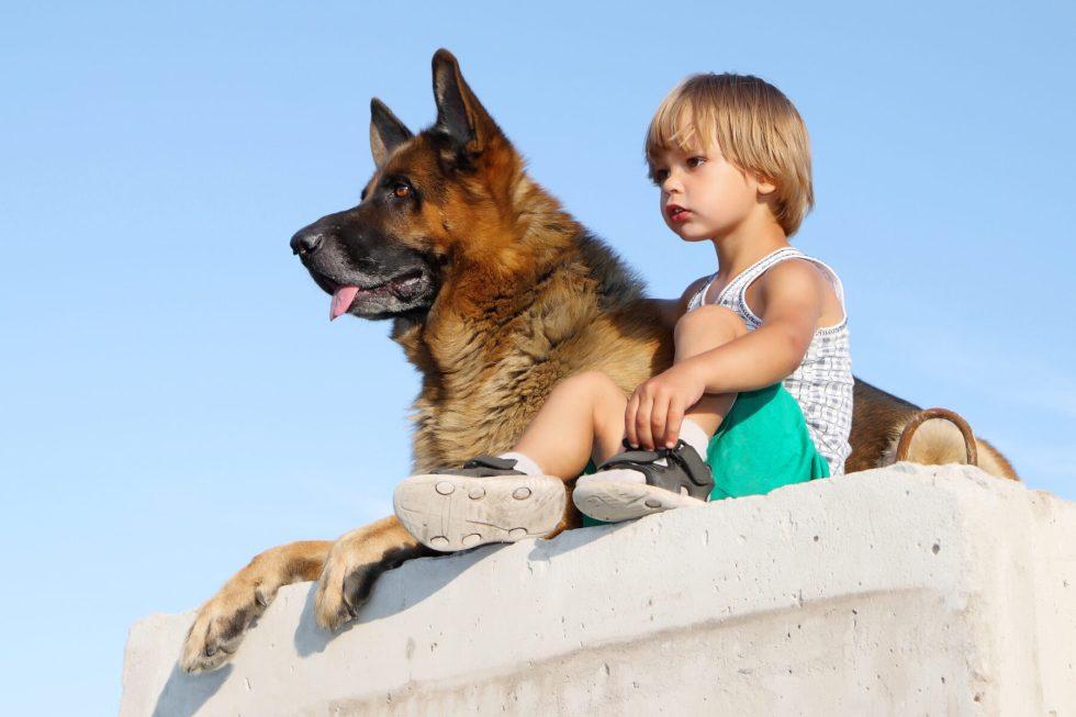 Are German Shepherds Loyal