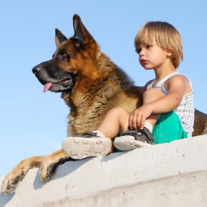 Are German Shepherds Loyal?