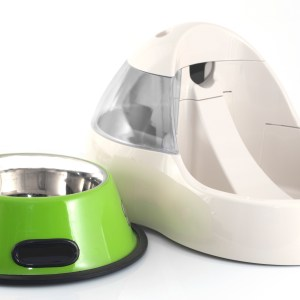 Best Automatic Dog Water Bowl