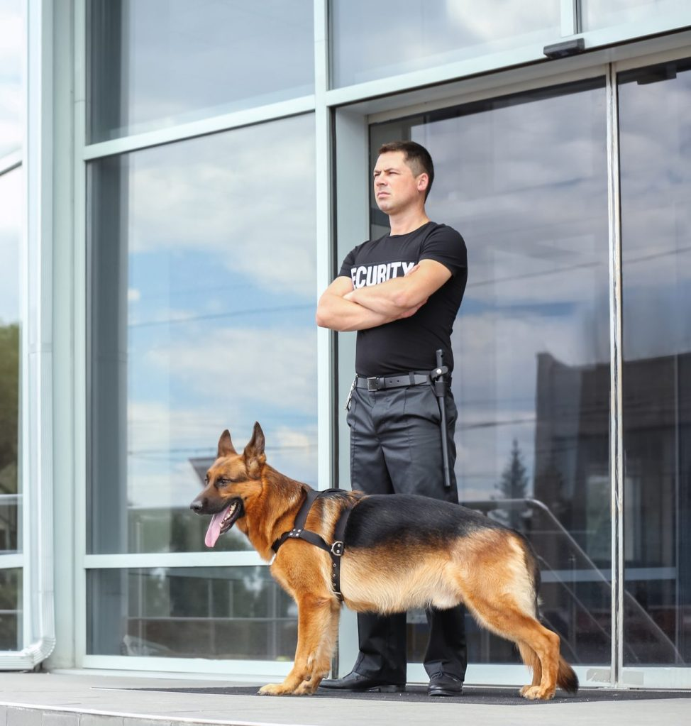 Are German Shepherds Good Guard Dogs?