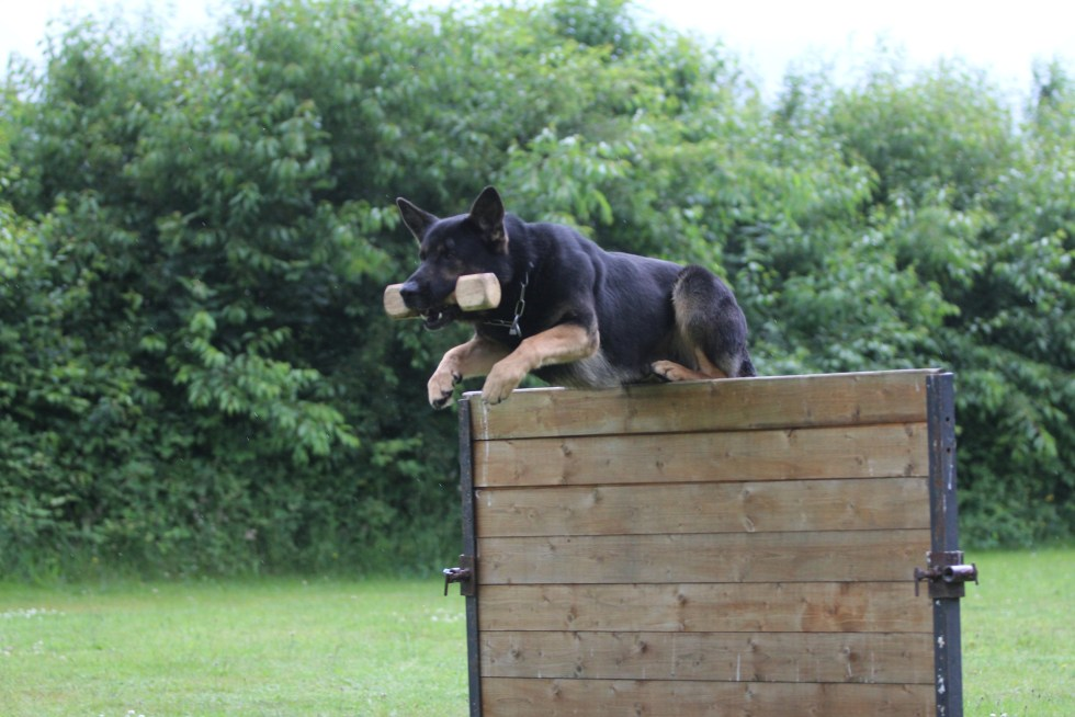 GDS Schutzhund Training