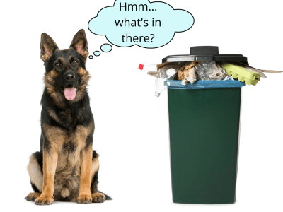 GSD Proof Garbage Can